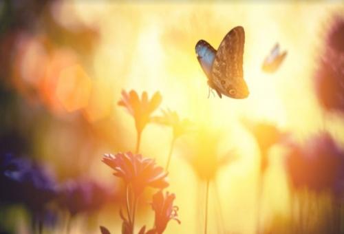 Il viottolo delle farfalle
